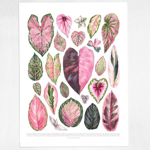 Aaron Apsley Botanical Watercolor -- Pink Houseplants Print