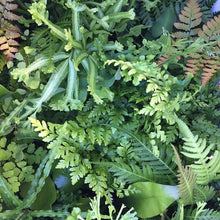Load image into Gallery viewer, Ferns (assorted)