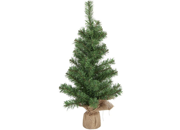Tip Norway Pine Tree- 60cm