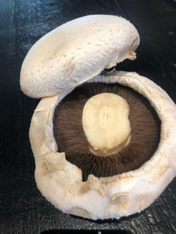 Large Flat Mushroom (Single)
