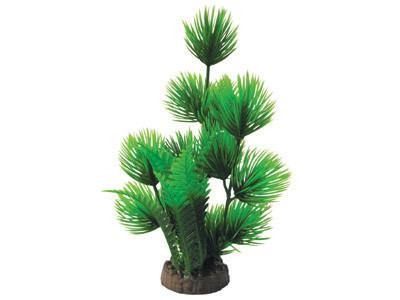 "12"" Bunch Plant (6 types) - Nature Aquariums"