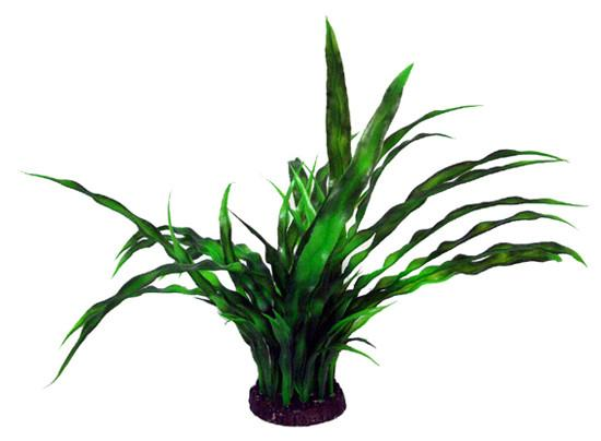 "20"" Bunch Variegated Rush - Nature Aquariums"