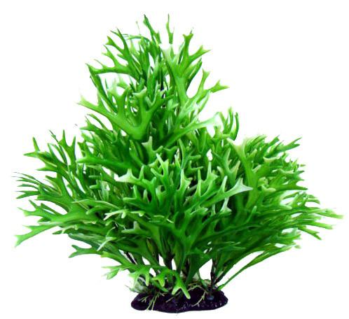 "13"" Bushy Plant Water Sprite - Nature Aquariums"