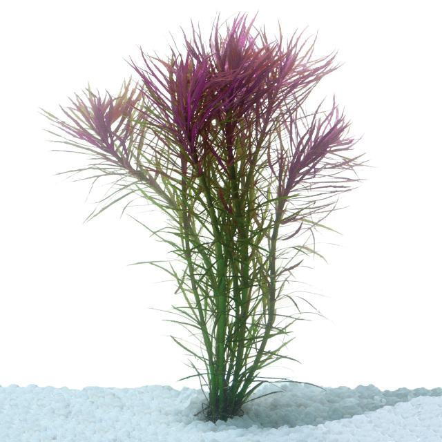 Pogostemon Stellata Bunch - Nature Aquariums