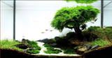 Bonsai Wood - Nature Aquariums