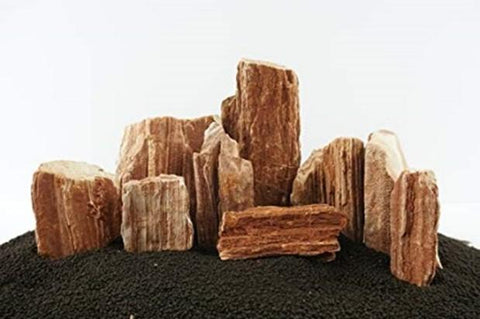Petrified Wood Stone - Nature Aquariums