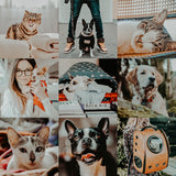 Mobile Lightroom Preset Film And Fur Blogger Lifestyle Instagram Warm Film Look Pet Lovers Lightroom Preset Made For Android iOS iPhone App