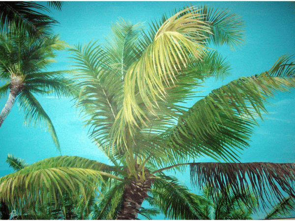 Key Largo Palm Tree