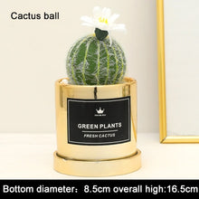 "Load image into Gallery viewer, ""Dangerously Cute"" Fake potted cactus"