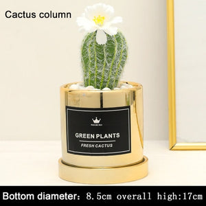 """Dangerously Cute"" Fake potted cactus"
