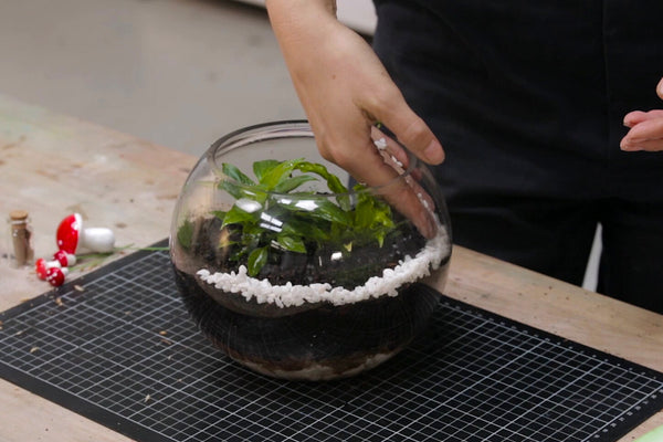 Terrarium Making Kit
