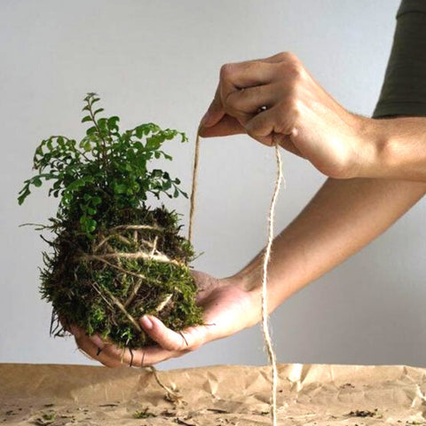 Kokedama Hanging Plant Kit (coming soon)