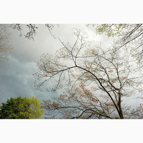 """Storm Over Dogwood"" Photograph on Metal by Nancy Reid Carr"