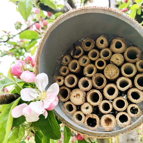 Bee Lodges
