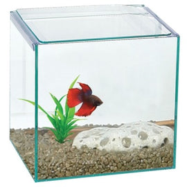 AQUA ONCE BETTA CUBE SQUARE GLASS TANK 16X16X16CM