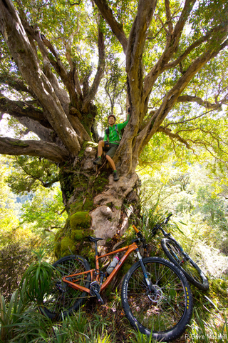 Chill Dirt Features - Riding Through Reefton and Blackball By Dave Mitchell