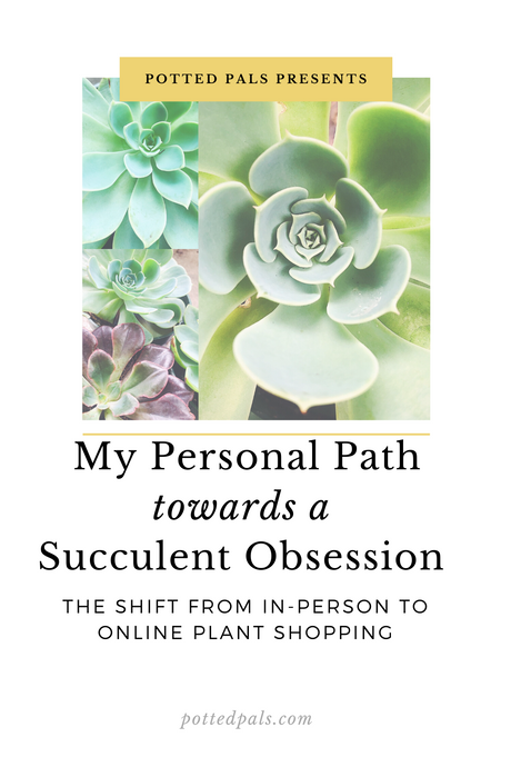 My Personal Path towards a Succulent Obsession