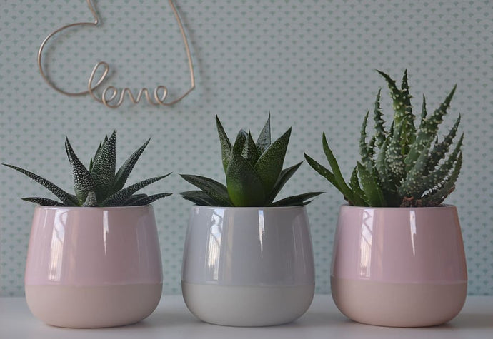 How to use Potted Pals for Interior Design