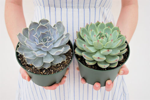 Potted duo - pottedpals.com