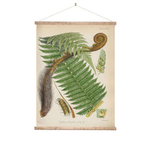 Load image into Gallery viewer, Vintage fern botanical wall chart
