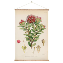 Load image into Gallery viewer, Northern rata botanical wall chart