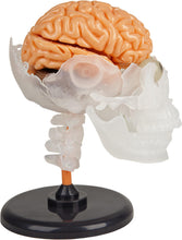 Load image into Gallery viewer, The Amazing Squishy Brain