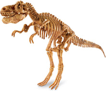 Load image into Gallery viewer, Dig it up dinosaur t.rex model completed