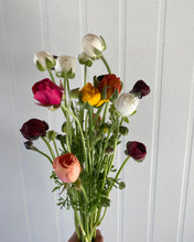 Load image into Gallery viewer, Ranunculus