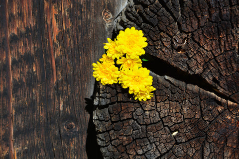 Flower Sprouting from a Tree Stump Wall Mural
