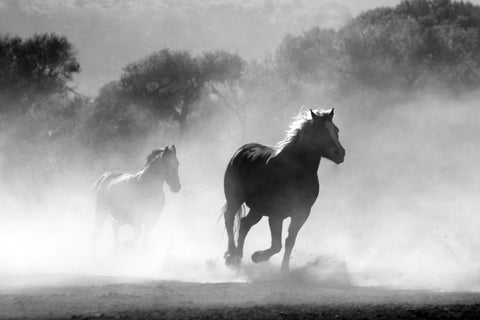 Majestic Wild Horse Black and White Wall Mural