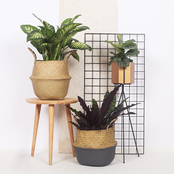 Foldable Hanging Flower Pot - The Quirky Home Co