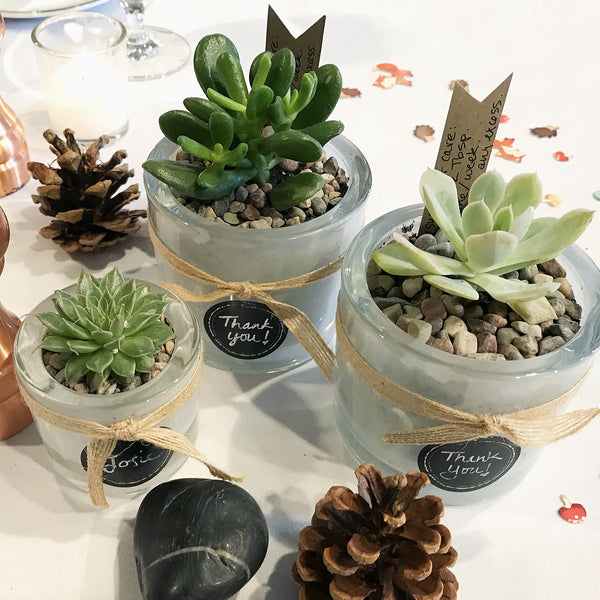 DIY Succulents in Glass Candle Holders