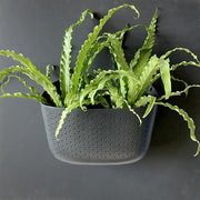 Wally Eco - Living Wall Planter - Charcoal