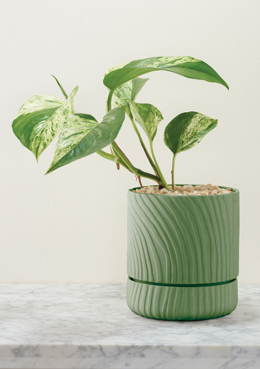 Abstract Relief Plant Pot | Thin Olive Green | Angus and Celeste