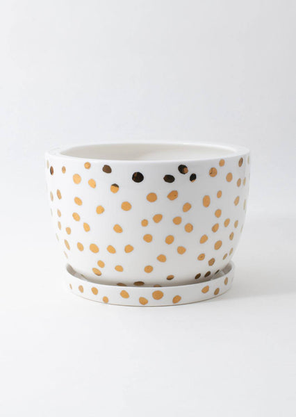 Decorative Plant Pot | Gold Spot | Angus and Celeste