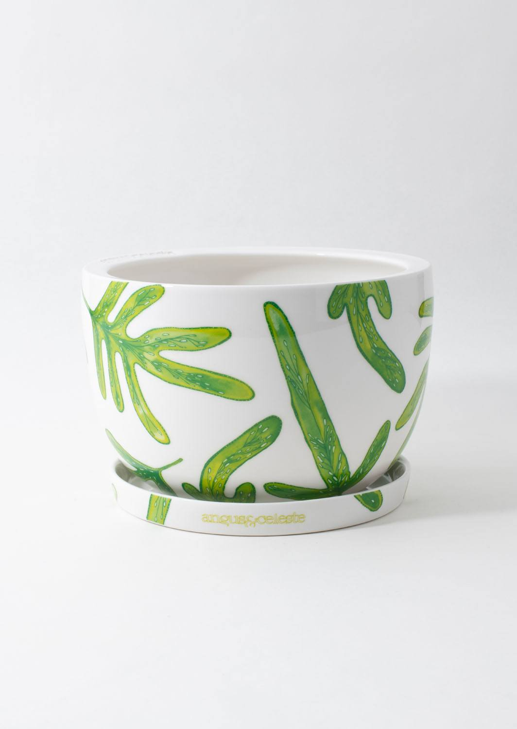 Decorative Plant Pot | Monarch Fern | Angus and Celeste