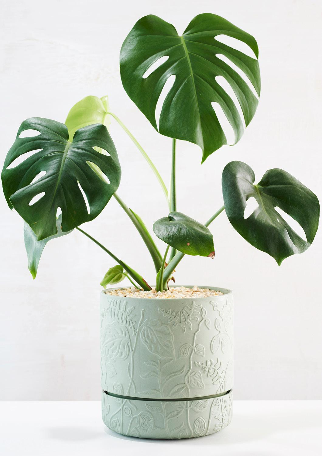 Folia Relief Plant Pot | Olive Green | Angus and Celeste