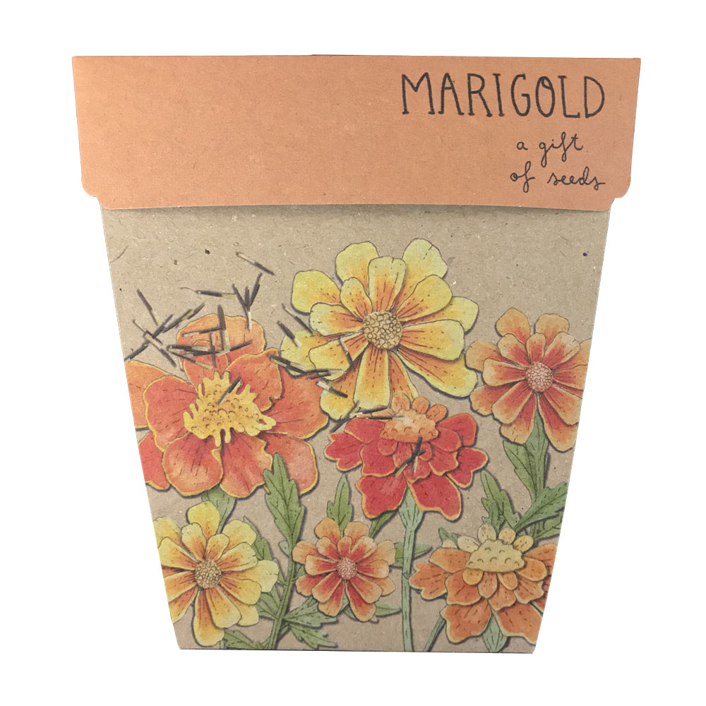 Marigolds Gift of Seeds | Sow n Sow