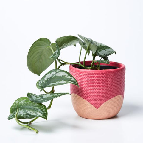 Petal Pot | Jones and Co | Magenta/Nectarine
