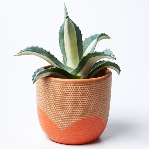 Petal Pot | Jones and Co | Brown/Orange