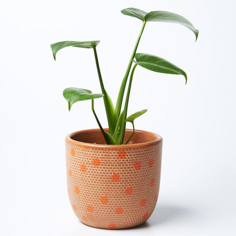 Spot Pot | Jones and Co | Brown/Orange