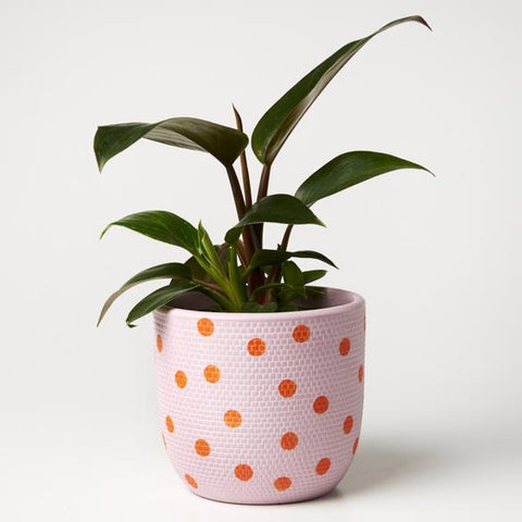 Spot Pot | Jones and Co | Lavender/Orange