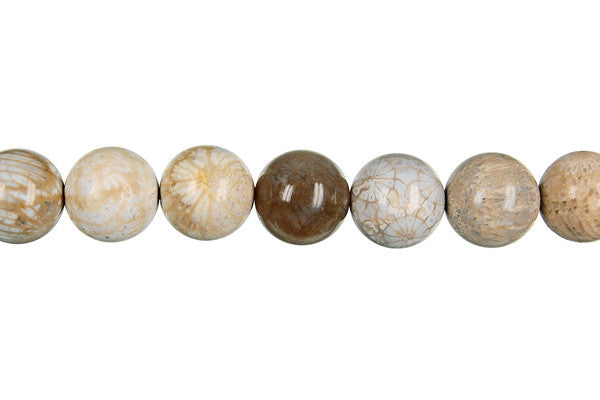Fossil Coral Round Beads