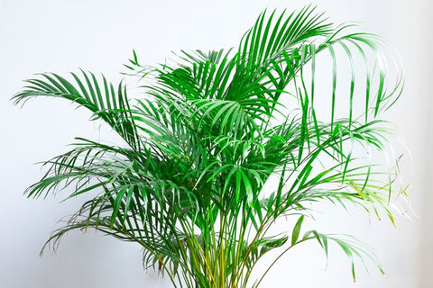 H2O HUMIDIFIER - Blog Post On Purifying Plants For Your Health