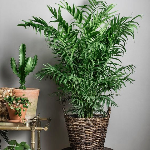 H2O HUMIDIFIER - Blog Post On Purifying Plants For Health