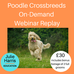 Poodle Crossbreeds Replay