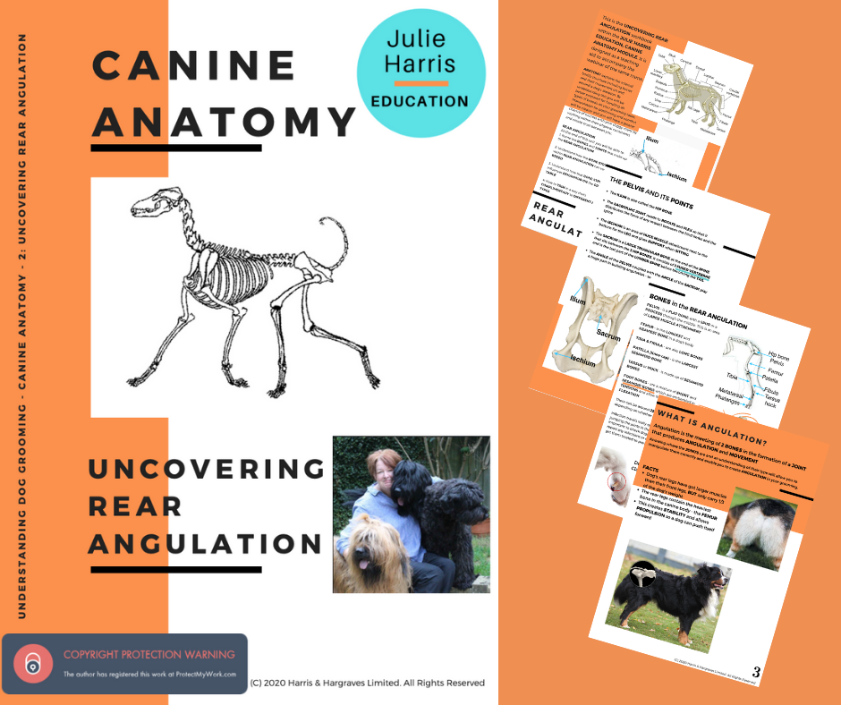 Canine Anatomy - Uncovering Rear Angulation - Digital Book