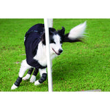 Dog Hock Brace, pair