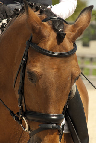 Rhinegold 'comfort' bridle with flash noseband