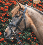 Mackey Legends Athena Bridle